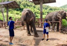 夫妇对在一个圣所的大象关心在池氏密林  免版税库存图片