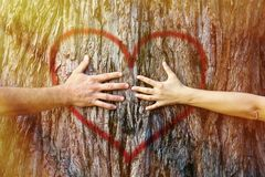 夫妇感人的心脏在阳光下 免版税库存图片
