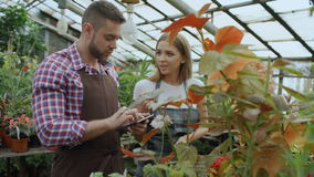 年轻夫妇所有者工作在园艺中心 可爱的男人和妇女围裙的计数花使用片剂计算机在期间 股票视频
