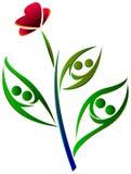 夫妇植物 免版税图库摄影