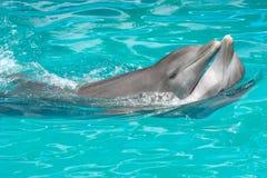 夫妇海豚爱 库存照片