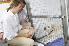 夫妇狗宠物访问 库存图片