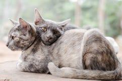 夫妇猫 库存图片