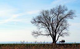 夫妇的剪影坐长凳在观看天际的一个光秃的橡树下 免版税库存图片
