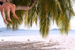 夫妇的腿坐在天堂海岛上的棕榈树 免版税库存图片
