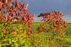 夫妇离开红色结构树 免版税库存图片
