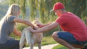 年轻夫妇花费时间户外与他们的爱犬 愉快的男人和妇女富感情地抚摸拉布拉多的或金黄 股票录像
