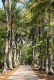 夫妇走一条直线路径在高棕榈之间 库存图片