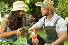 夫妇从事园艺的年轻人 免版税库存图片