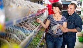 夫妇画象选择糖果在商店 库存图片