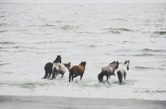 失去控制的马,奥梅特佩岛尼加拉瓜 免版税库存图片