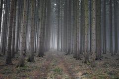 失去的森林 免版税库存照片