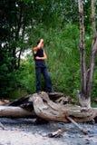 失去的森林 免版税库存图片