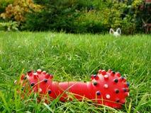 失去的红色玩具 免版税图库摄影