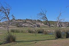 失去的结构树 库存照片