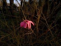 失去的浅粉红色手套 免版税库存照片