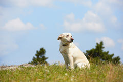 失去的狗 免版税图库摄影