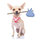 失去的狗 免版税库存图片