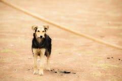 失去的狗 图库摄影