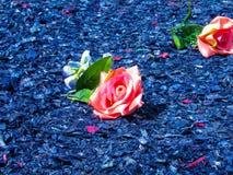 失去的玫瑰在锯木屑海  库存照片