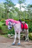 头发的马粉红色 免版税库存照片