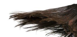 头发移动 免版税库存照片