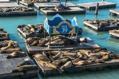 39头弗朗西斯科狮子码头圣海运 免版税图库摄影