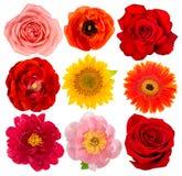 头状花序玫瑰色向日葵牡丹gerber隔绝了白色backgroun 免版税图库摄影