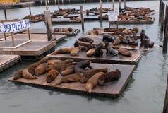 39头狮子码头海运 图库摄影