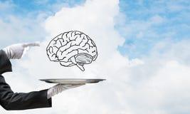 头脑能力发展的概念 库存照片