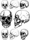 头骨向量 库存照片