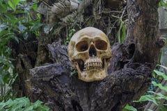 头骨和骨头从坑digged在密林找到的可怕坟园 不要认识性别,不认识名字,等待 库存照片