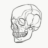 头骨样式在手中被画的样式 传染媒介黑白例证 库存图片
