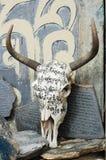 头骨西藏牦牛 库存图片