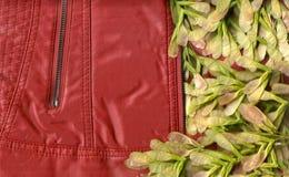 夹克和植物 免版税库存照片