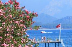 夹竹桃在海和土耳其旗子开花 免版税库存图片
