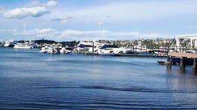 夹竹桃小游艇船坞,悉尼港口,澳大利亚 影视素材