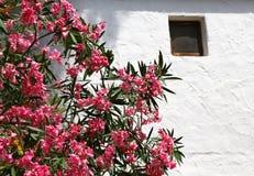 夹竹桃花在地中海房子庭院里  库存图片