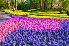 奇妙风信花花在Keukenhof公园 图库摄影