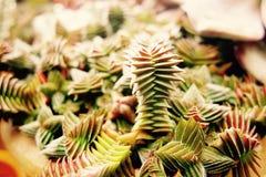 奇怪内容丰富的植物 库存照片