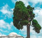奇怪地在剧烈的天空和历史建筑前面圆屋顶的形状的杉树在老镇伊斯坦布尔 免版税库存照片
