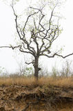 奇怪树 免版税库存图片