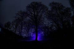 奇怪的光在一个黑暗的森林里在晚上 站立在有光的黑暗的森林里的人剪影 黑暗的夜在雾的森林里 图库摄影