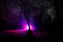 奇怪的光在一个黑暗的森林里在晚上 站立在有光的黑暗的森林里的人剪影 黑暗的夜在雾的森林里 免版税图库摄影