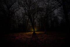 奇怪的光在一个黑暗的森林里在晚上 站立在有光的黑暗的森林里的人剪影 黑暗的夜在雾的森林里 免版税库存图片