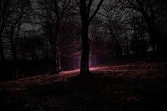 奇怪的光在一个黑暗的森林里在晚上 站立在有光的黑暗的森林里的人剪影 黑暗的夜在雾的森林里 库存图片