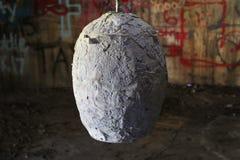 奇怪的工业鸡蛋 免版税图库摄影