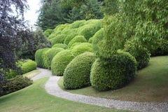 奇怪的庭院 库存图片