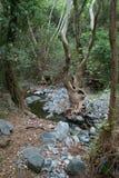 奇怪的树在森林里 库存照片