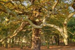 奇怪的树 免版税库存图片